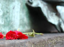 Trandafir roșu