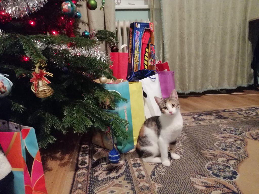 pisică în casă
