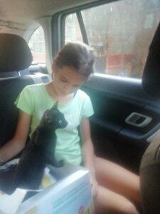cu pisica în mașină